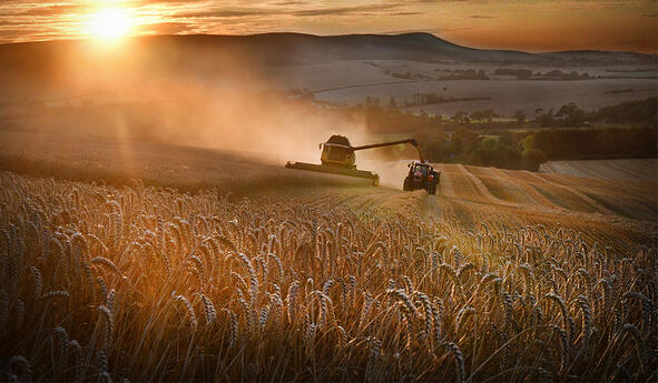 Harvesting campaign