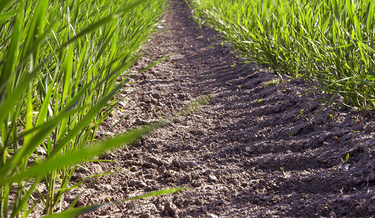 consequences of damaged tyres for your soils